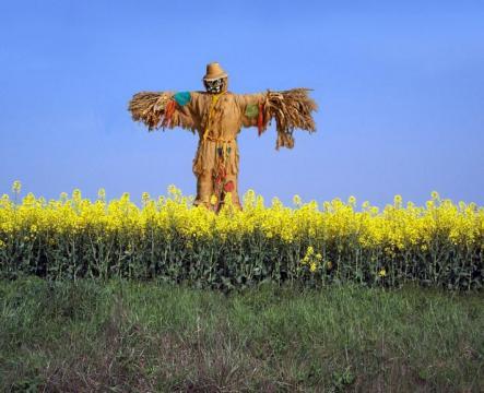 scarecrows001